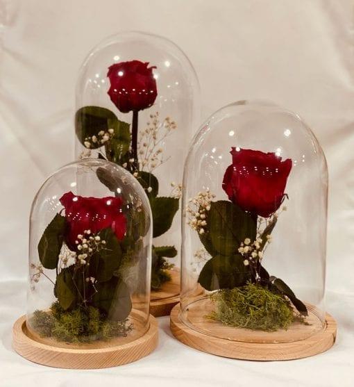 Fanal con rosa preservada